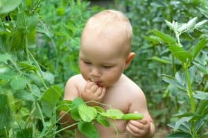 Baby eating plants